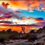 joyfulweddings-ca-desert-wte